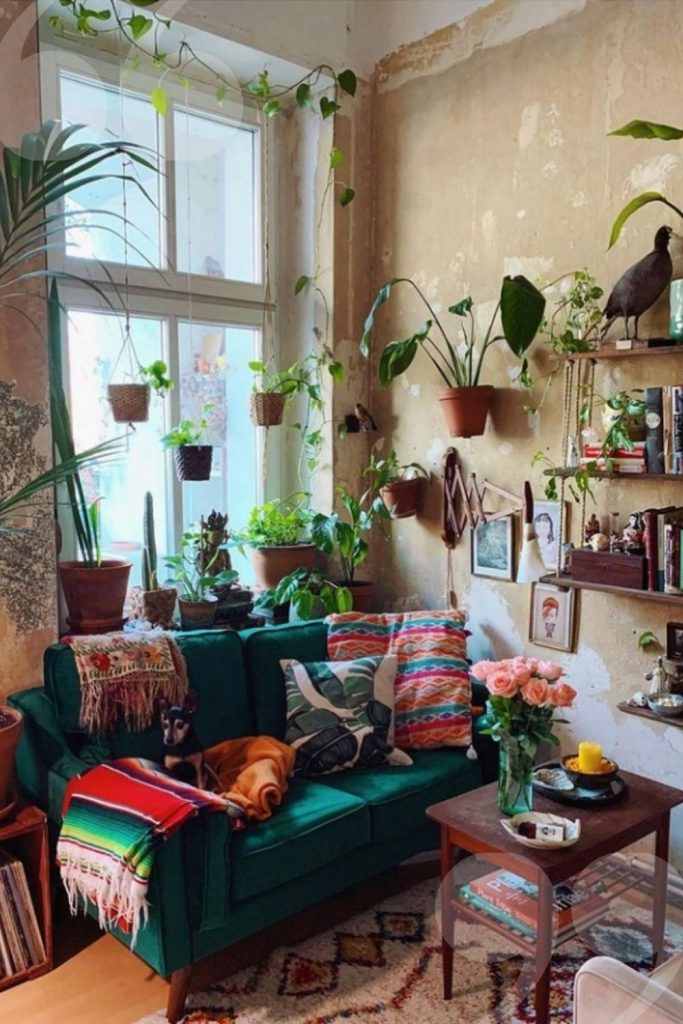 Green Plants Bring Benefits to Home Decoration